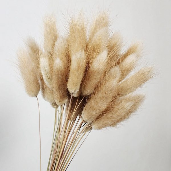 Natural Dried Flowers Rabbit Tail Grass