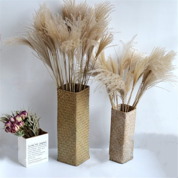 Real Pampas Grass